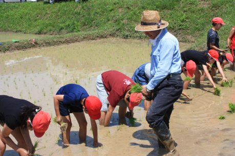 田植えを楽しむ(食農教育)2