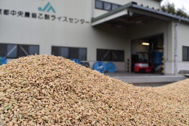 2018年産米晩生品種乾燥調製作業のピークを迎える
