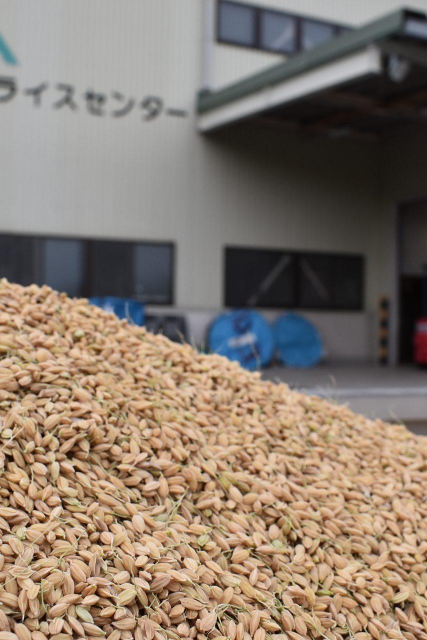 2018年産米晩生品種乾燥調製作業のピークを迎える1