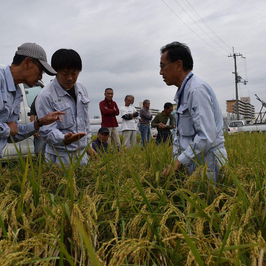 水稲適期刈取現地検討会と採種圃場の2次審査会が開催されました1