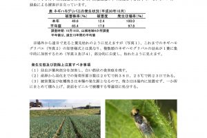 防除所ニュース 平成30年第4号「ネギハモグリバエ情報」1