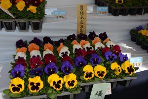 平成30年度京都府花き品評会2
