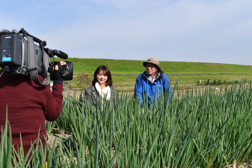 旬の京野菜「九条ねぎ」のTV取材を対応1