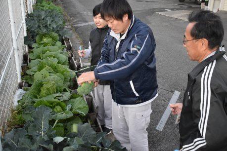 BB肥料の効果確認試験調査1