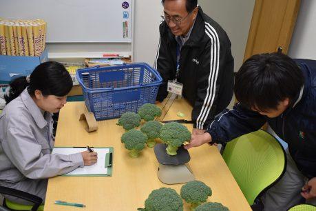 BB肥料の効果確認試験調査2