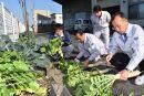 BB肥料の効果確認試験調査