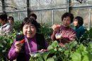 女性部全体企画旅行「早春渥美半島 菜の花まつりといちご狩り収穫体験1泊2日」