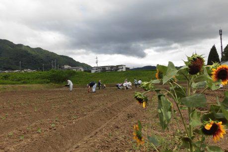 9月にひまわりを咲かせようプロジェクト2