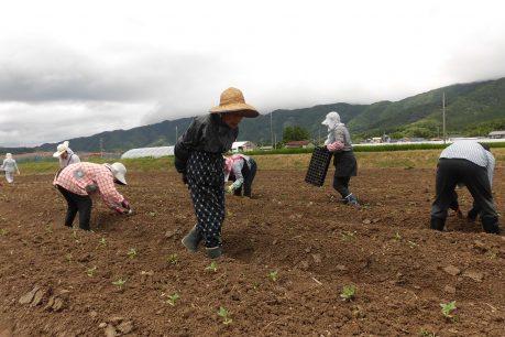 9月にひまわりを咲かせようプロジェクト1