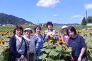「え!?今頃ひまわり大原野」開花イベント