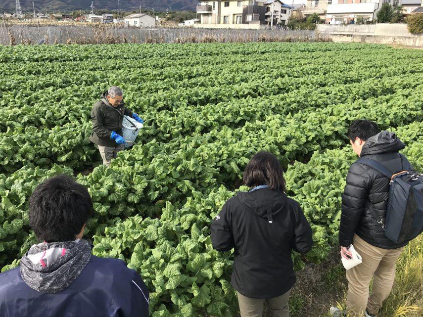 地域特産物「花菜」の魅力を発信1