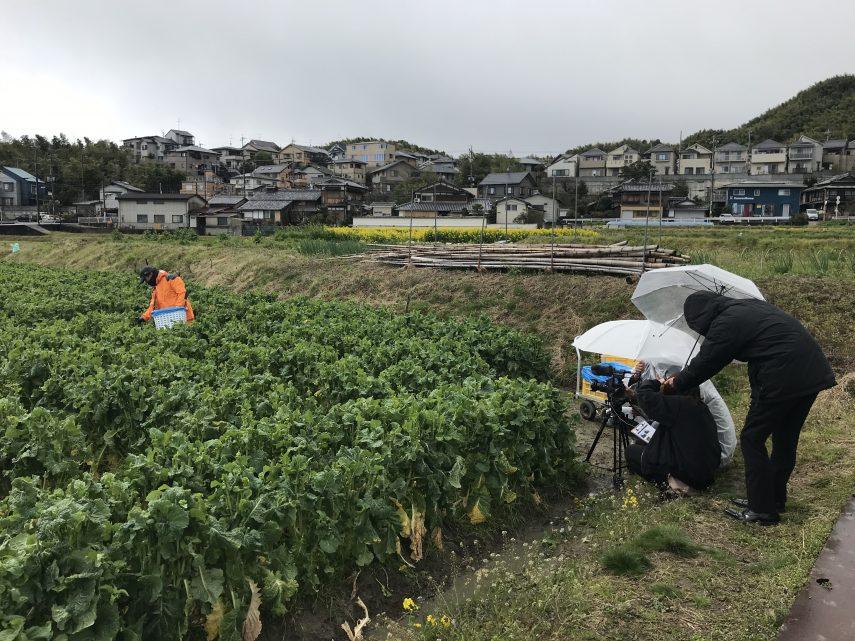 花菜の魅力を発信1
