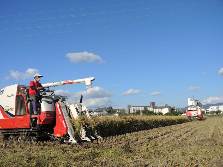 業務用米の収穫最盛期を迎えています1