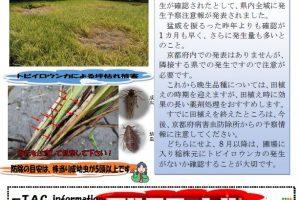 営農技術情報「奈良県におけるトビイロウンカ発生情報」2