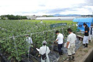 京都乙訓地域茄子立毛品評会が開かれました1