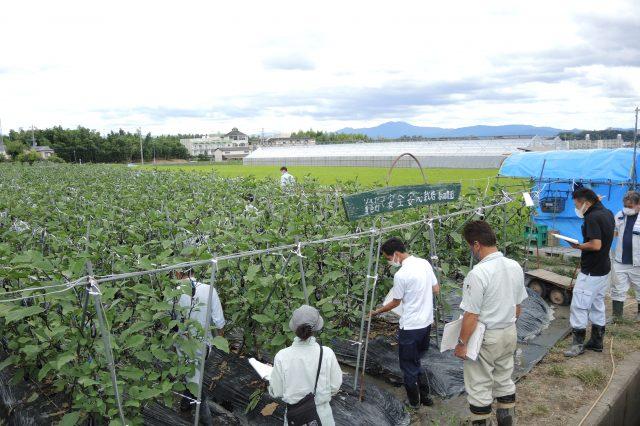京都乙訓地域茄子立毛品評会が開かれました